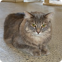 Domestic Longhair Cat for adoption in Michigan City, Indiana - Harley & Smores