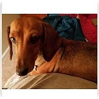 Adopt A Pet :: Georgia - Orangeburg, SC