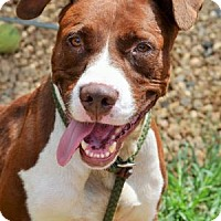 Hound (Unknown Type) Mix Dog for adoption in Philadelphia, Pennsylvania - Tinker