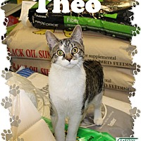 Adopt A Pet :: Theo - Fallston, MD