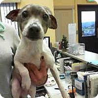 Adopt A Pet :: Jack - Morgan Hill, CA