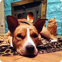 Adopt A Pet :: Willie - Nashville, TN