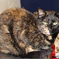Adopt A Pet :: EMILY - Hampton Bays, NY