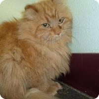 Adopt A Pet :: Scruffy - Montello, WI