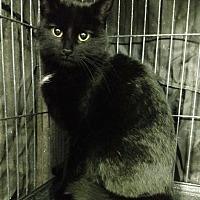 Adopt A Pet :: Susie - Saginaw, MI