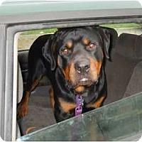 Adopt A Pet :: Cain - Douglasville, GA