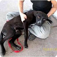 Adopt A Pet :: Elias - Scottsdale, AZ