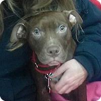 Adopt A Pet :: Jack - East Rockaway, NY