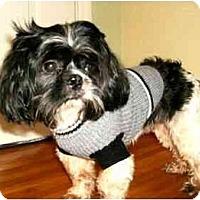 Adopt A Pet :: Scout - Mooy, AL