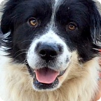 Adopt A Pet :: BILLY (video) - Los Angeles, CA