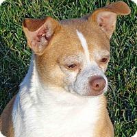 Adopt A Pet :: Macho - Rochester, NY