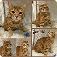 Adopt A Pet :: Garfield - Joliet, IL