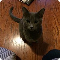 Adopt A Pet :: Scottie - Duluth, GA