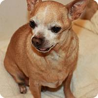 Adopt A Pet :: Wilbur - Buckeye, AZ