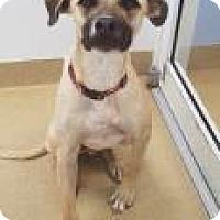 Adopt A Pet :: Thunder - Miami, FL