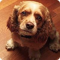 Adopt A Pet :: Teddy - Oakland, CA