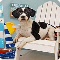 Adopt A Pet :: Whammy Montgomery - Urbana, OH