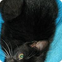 Adopt A Pet :: Smidgen - Bedford, VA