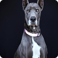 Adopt A Pet :: Grace - SAN PEDRO, CA