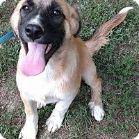 Adopt A Pet :: Lavern - Windham, NH
