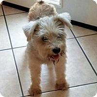 Adopt A Pet :: Bitsy - Spring, TX