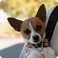 Adopt A Pet :: D.J. - Palmdale, CA