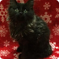 Adopt A Pet :: Husna - Mesa, AZ