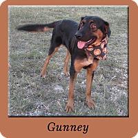 Adopt A Pet :: Gunney - Hillsboro, TX