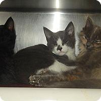 Adopt A Pet :: Steve, Clyde, &Maudia - Newport, NC
