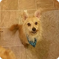 Terrier (Unknown Type, Medium) Mix Dog for adoption in Custer, Washington - Henry