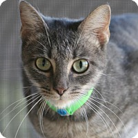 Adopt A Pet :: Stella - North Fort Myers, FL