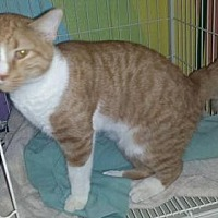 Adopt A Pet :: Luther - Iroquois, IL