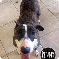 Adopt A Pet :: Penny - Lake Worth, FL
