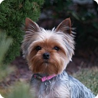 Adopt A Pet :: Mi Mi Mi - Sinking Spring, PA