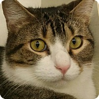 Adopt A Pet :: Barry - Spring, TX