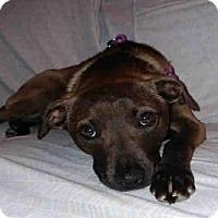 Adopt A Pet :: NELLY - Atlanta, GA