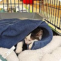 Adopt A Pet :: Cassie - Orillia, ON