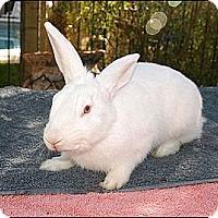 Adopt A Pet :: Fletcher - Phoenix, AZ
