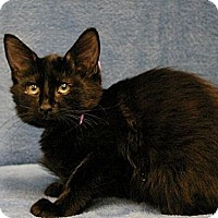Adopt A Pet :: Richard - Sacramento, CA