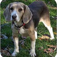 Adopt A Pet :: Ranger - Novi, MI