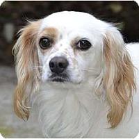 Adopt A Pet :: Tony - San Diego, CA