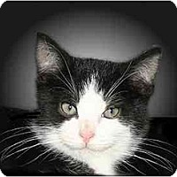 Adopt A Pet :: Prince - Montgomery, IL
