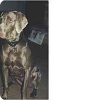 Adopt A Pet :: Duchess - Eustis, FL