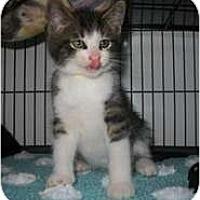 Adopt A Pet :: Reginald - Shelton, WA