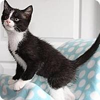 Adopt A Pet :: Demetrius - Union, KY