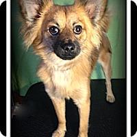 Adopt A Pet :: Jasper - Indian Trail, NC