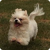 Adopt A Pet :: Bianca - Kingwood, TX