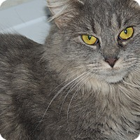 Adopt A Pet :: Willow - Ortonville, MI