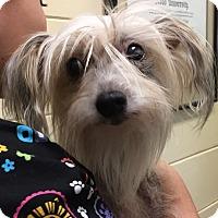Adopt A Pet :: Deko - Orlando, FL