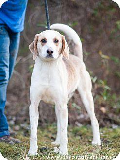 Foxhound Mix Dog for adoption in Louisville, Illinois - Tracker